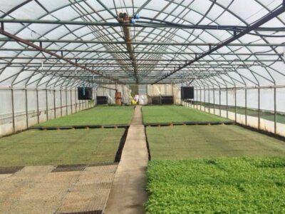 Fläktluftvärmare växthus